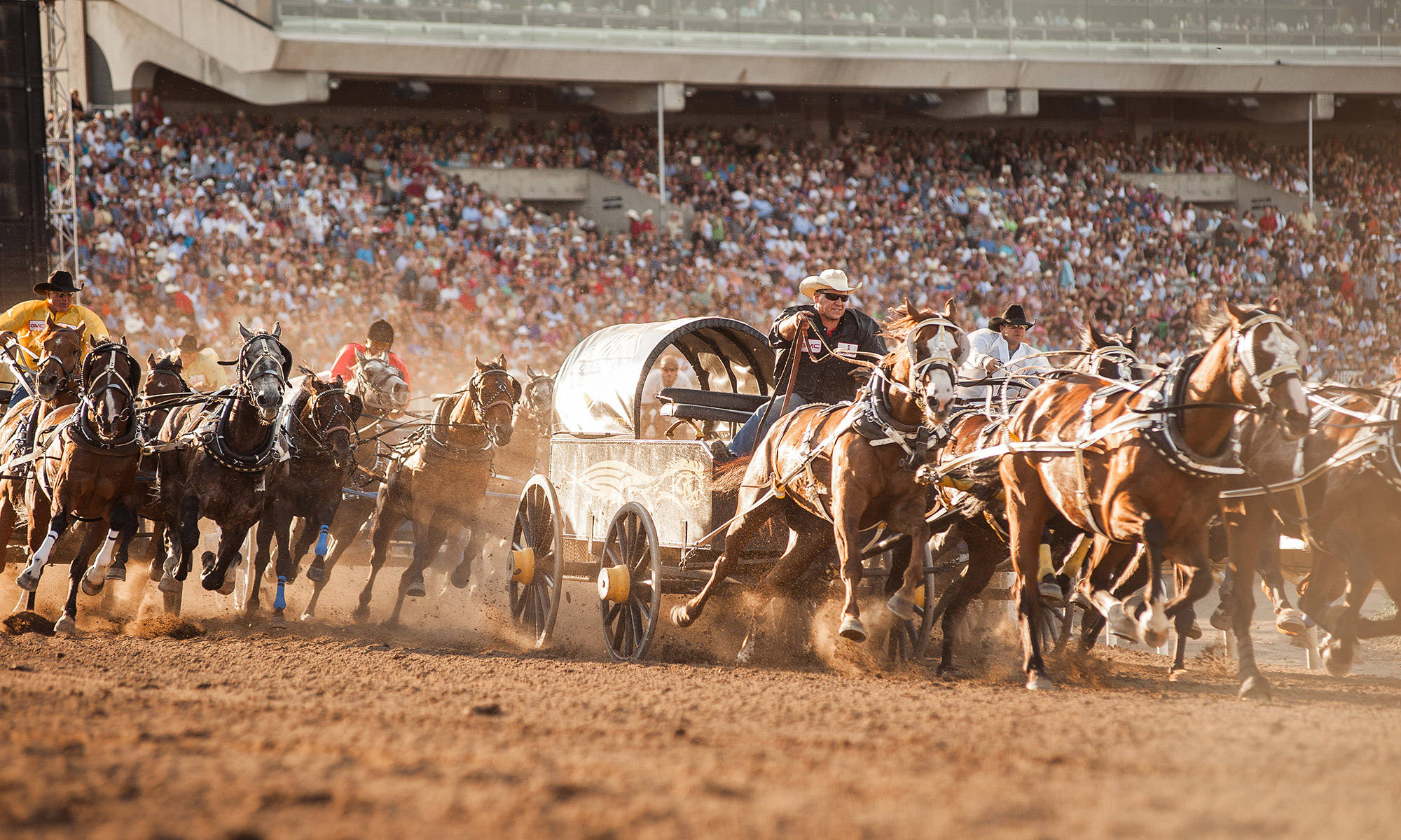 major travel plc calgary stampede extravaganza