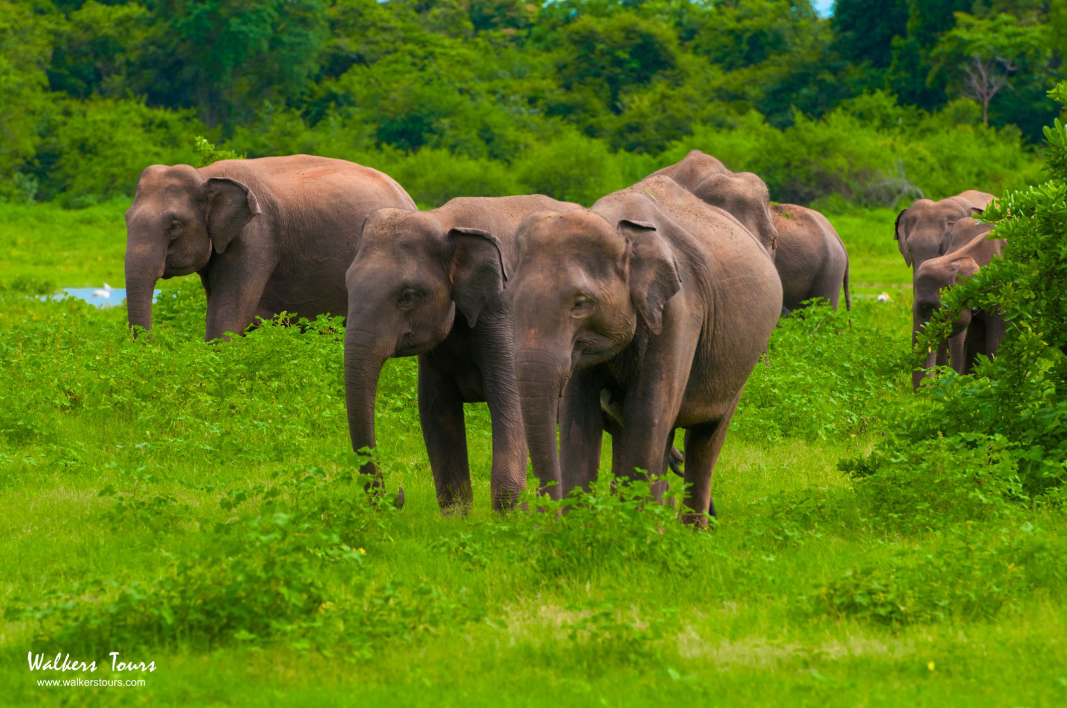 Major Travel Plc :: Sri Lankan Experience